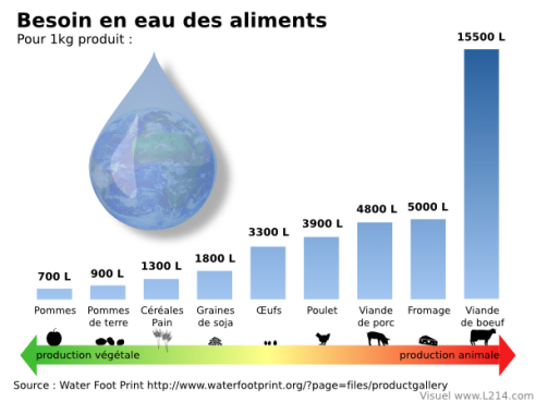 eau-fonction-aliments-600x450