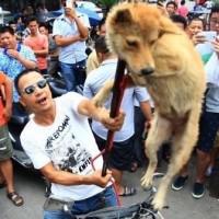 Des chiens battus, puis saignés à mort
