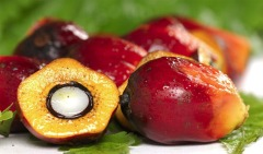 fruits-huile-de-palme