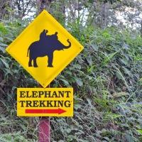 Ballade à dos d'éléphant