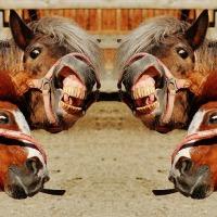 Humour de poney