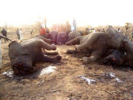 SOS_Elephants